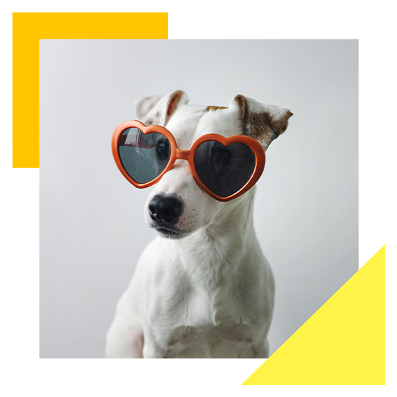 White dog wearing heart shaped sunglasses